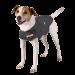 Thundershirt | Hund in Grau | grau 1
