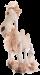Trixie | Kamel | Plüsch,Stoff,Tau,braun,weiß 1