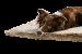 Hunter   Tierdecke Astana in Braun   Stoff,braun,beige 4