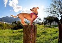 Chihuahua in den Bergen