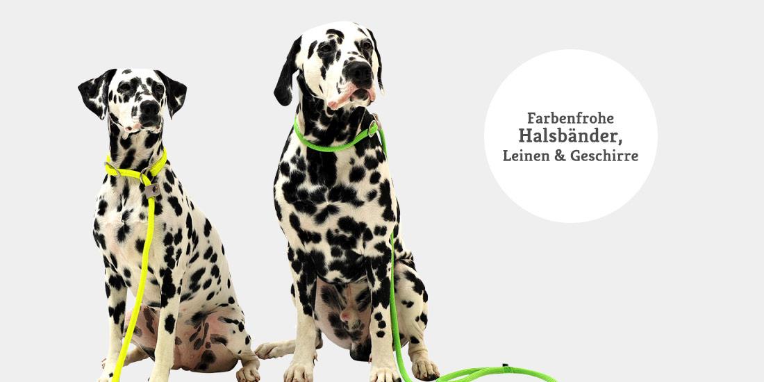 Bunte Hundeleinen, Hundehalsbänder & Hundegeschirre