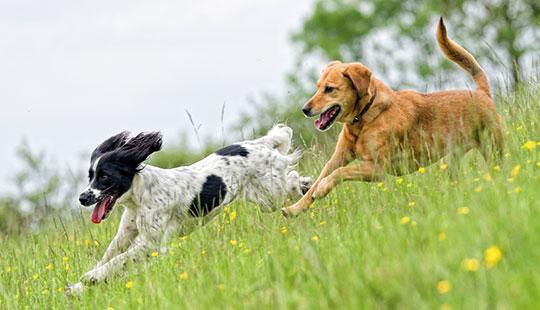 hund-mag-andere-hunde