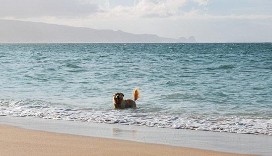 Hund-strand1