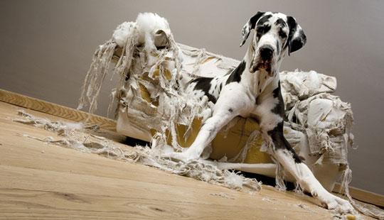 Hund_Couch1