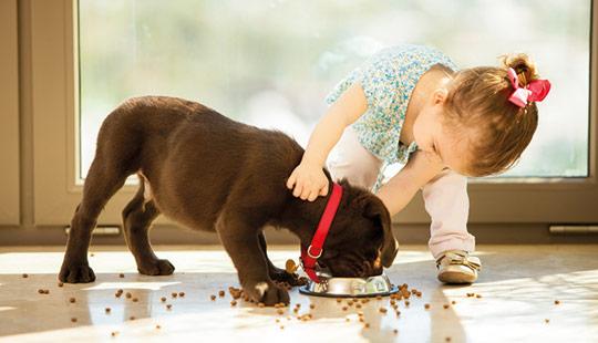 Hund-mit-Mädchen1