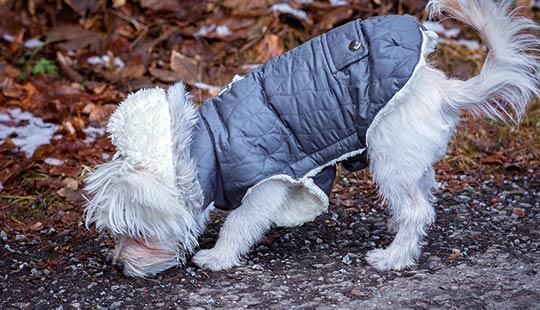 Hund-riecht-am-Boden1