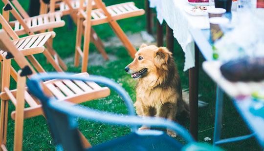 Hund am Tisch1