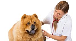 Von Tierärzten geprüft
